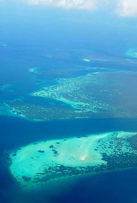 Passions et partage r cifs de corail la grande barri re de corail - Temperature ambiante ideale ...