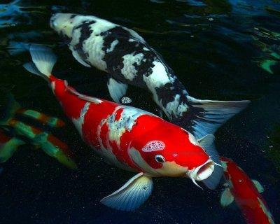 passionné de pêche Index du Forum