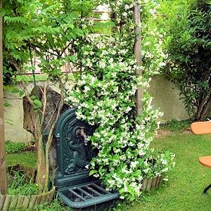 passions et partage quelques fleurs qui poussent sans eau ou presque. Black Bedroom Furniture Sets. Home Design Ideas