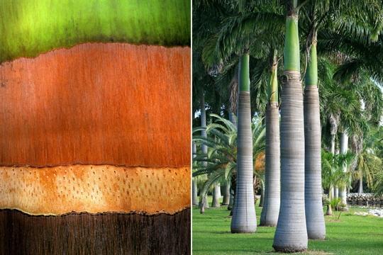 passions et partage reconna tre les corces des arbres. Black Bedroom Furniture Sets. Home Design Ideas