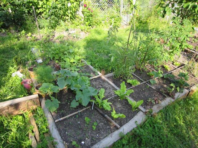 Le forum des border terriers c 39 est un petit jardin for C est un jardin