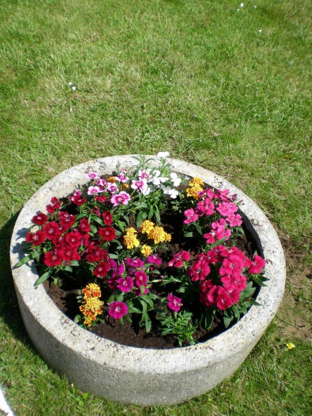 Wonderful le bon coin 47 jardinage 9 dscn4094 for Le bon coin 23 jardinage