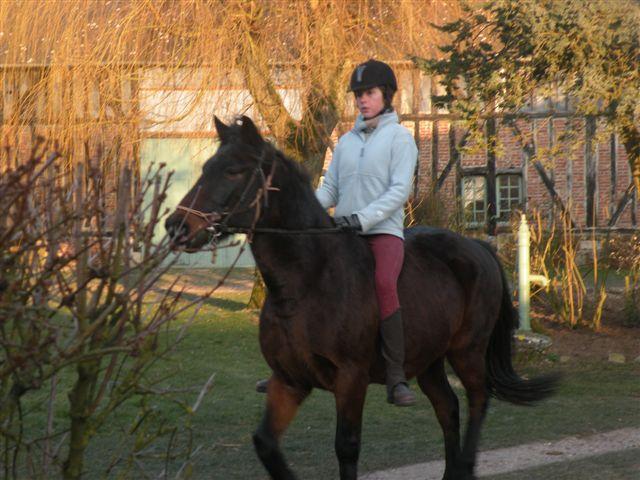 Terre de cheval jusqu 39 quel age peut on faire pouliner - Jusqu a quel age peut on emprunter ...