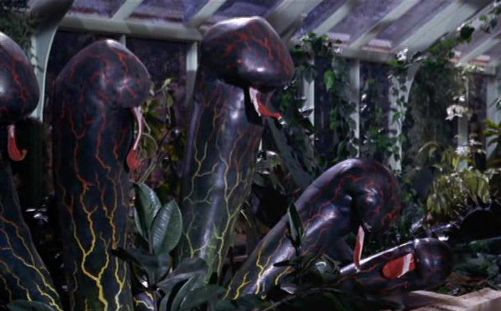 plante carnivore film d'horreur