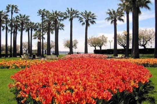 passions et partage .::. massifs et parterres floraux -