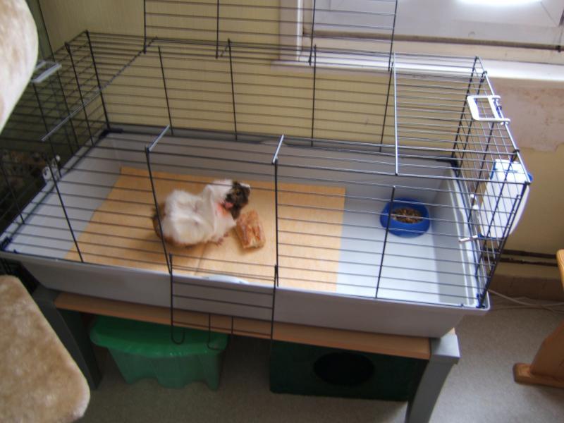 la maison des chats de valenciennes le forum cherche. Black Bedroom Furniture Sets. Home Design Ideas