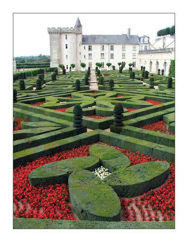forum jardin au naturel l 39 art topiaire. Black Bedroom Furniture Sets. Home Design Ideas