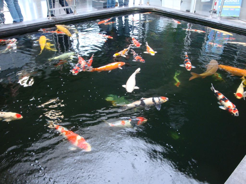 Bassin interieur poisson rouen maison design - Bassin japonais carpe koi asnieres sur seine ...