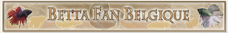 Betta Fan Belgique : site belge des passionnés de betta et de l'aquariophilie Forum Index