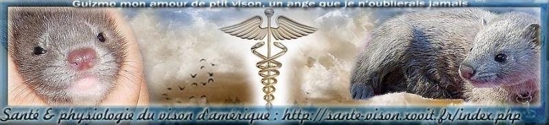 Référence santé & physiologie du vison d'Amérique Index du Forum