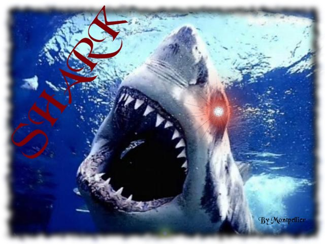 shark Index du Forum