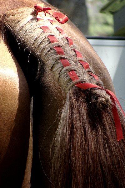 Tout en crins forum cheval et quitation tresse de queue et ruban - Tresse queue de cheval ...