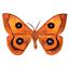 Papillon Hachette