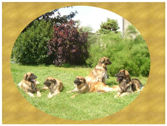 SOS LEONBERG Index du Forum