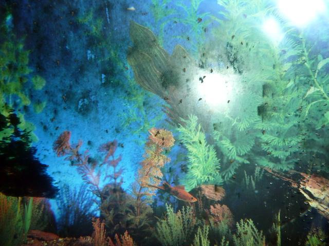 notre forum contr 244 ler la population d escargots dans un aquarium