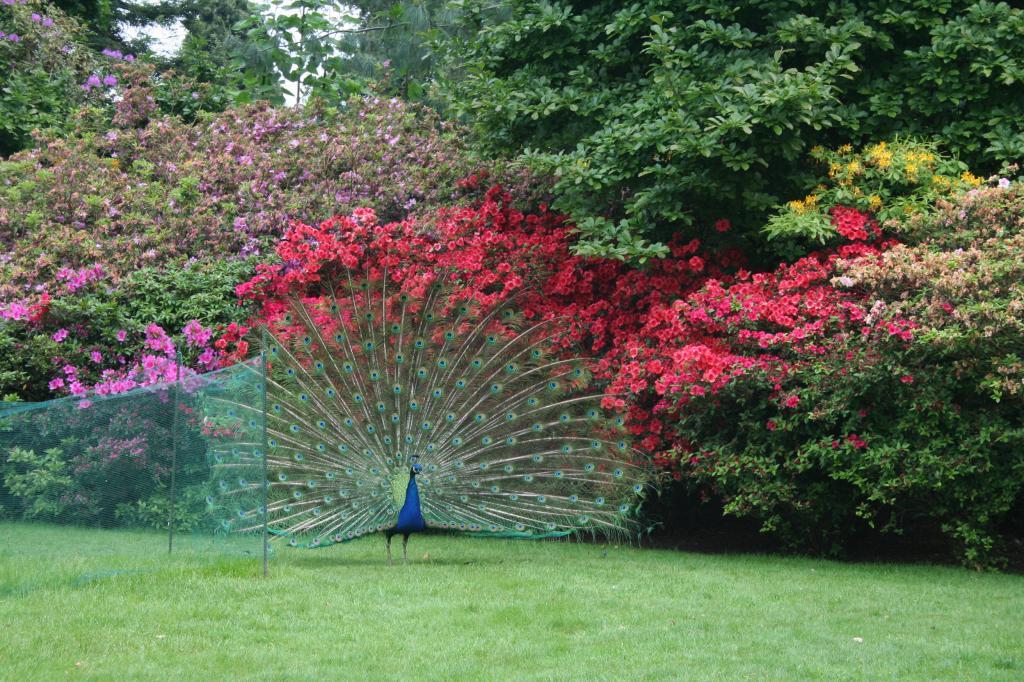 forum jardin au naturel gros oiseaux d 39 ornements au jardin. Black Bedroom Furniture Sets. Home Design Ideas