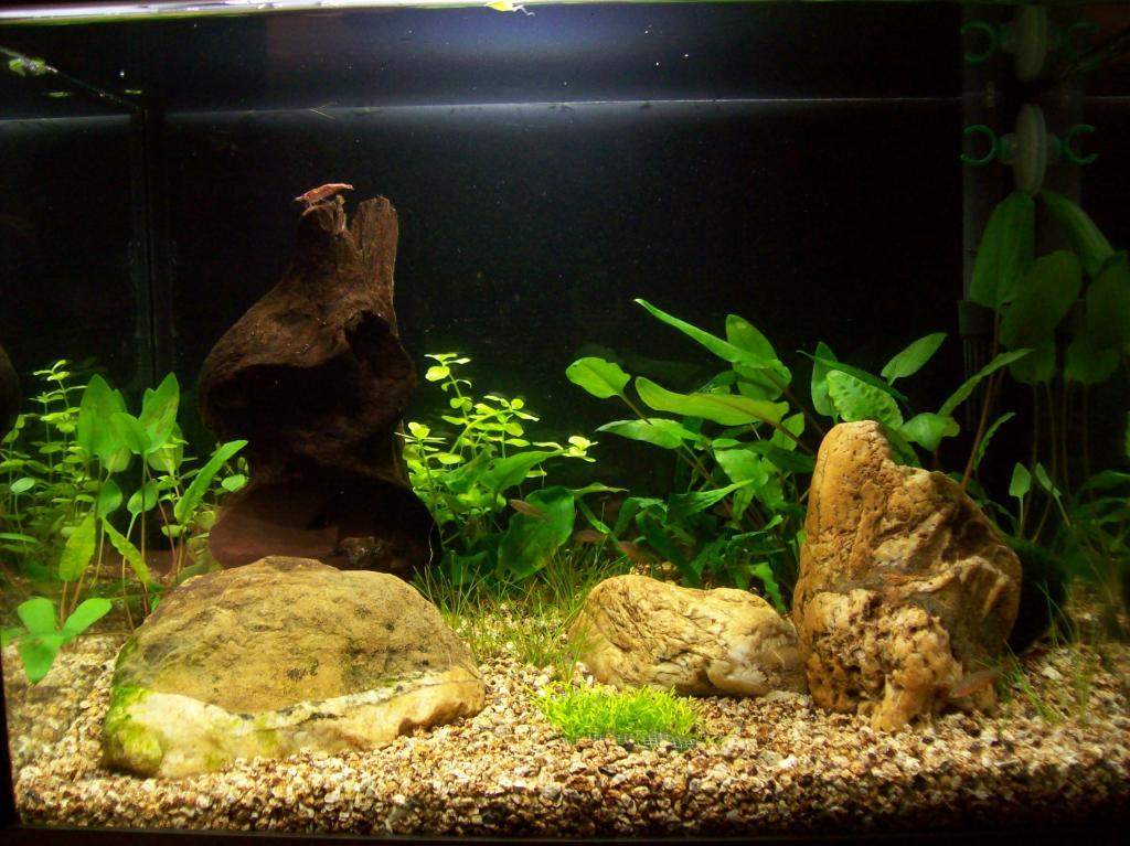 Nano 20l filtre ext rieur fabrication maison start 14 for Filtre aquarium 20l
