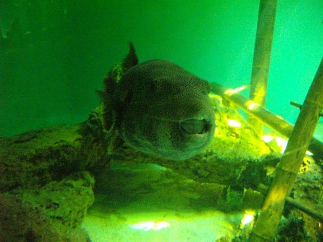 aquarouen aquarium du 7 232 me continent