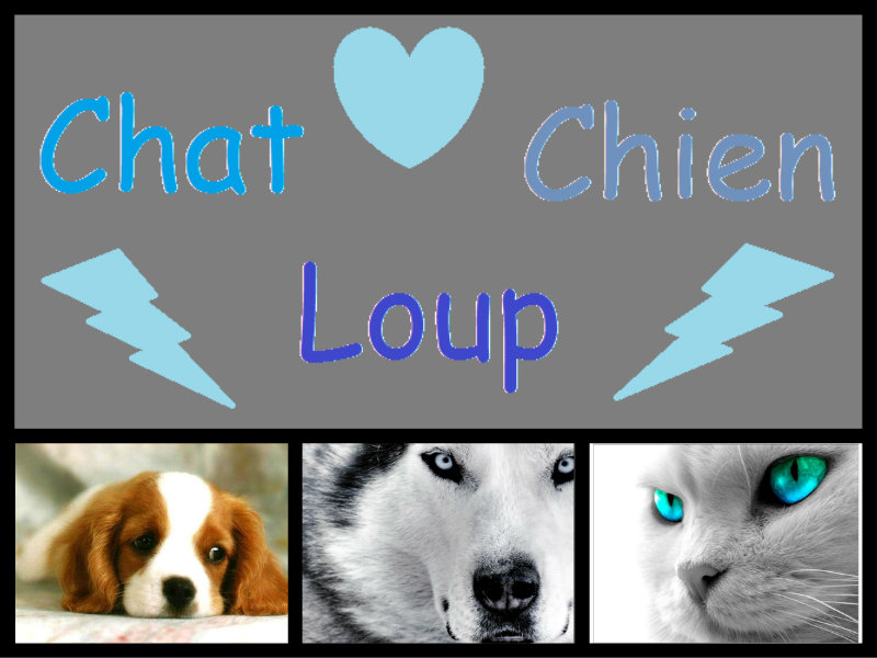 Quatre clans de chats, de chiens et de loups Index du Forum