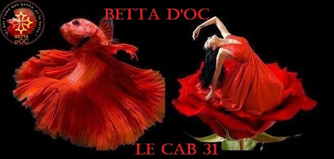 betta d'oc Index du Forum