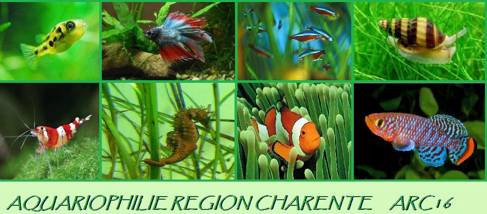 aquariophilie region charentaise 16 Index du Forum