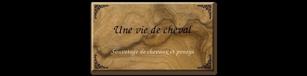 Forum de sauvetage de chevaux et poneys - Une vie de cheval -  Index du Forum