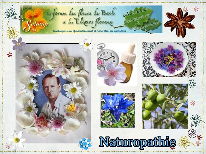 fleurs de bach et lixirs floraux solange venez retrouver quilibre et nergie avec l. Black Bedroom Furniture Sets. Home Design Ideas