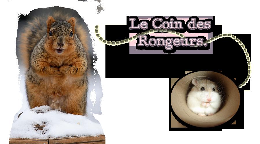 Le Coin Des Rongeurs Index du Forum