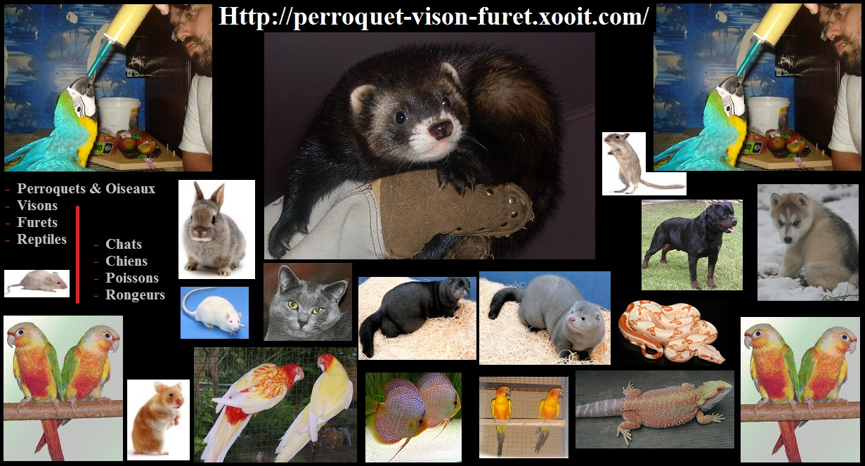perroquets visons furets Index du Forum