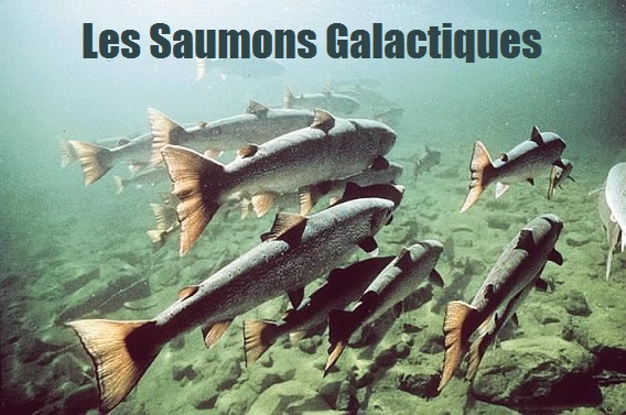 Les Saumons Galactique Index