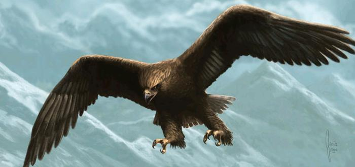 Les Aigles de Manwe Index du Forum