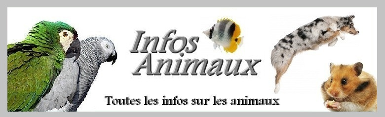 InfosAnimaux Index du Forum
