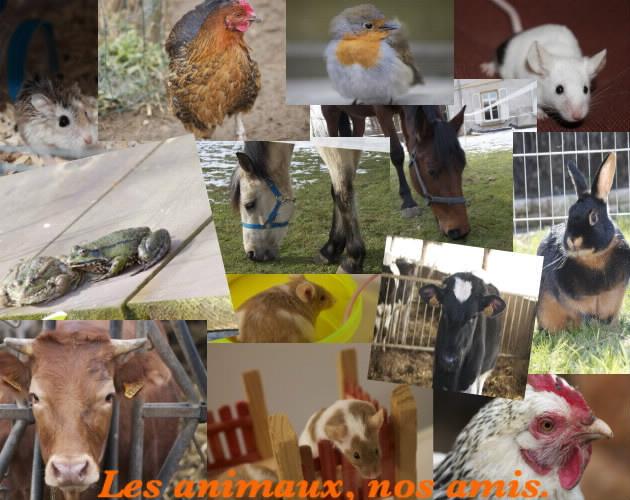 Les animaux, nos amis Index du Forum