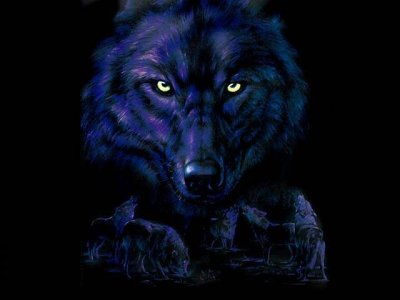 black wolves brotherhood Index du Forum