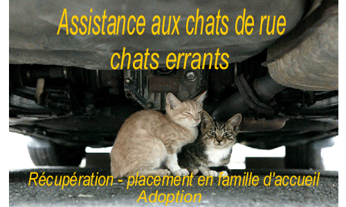 adoptions chats - assistance féline Index du Forum