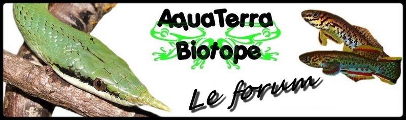 Aquaterra-biotope Index du Forum