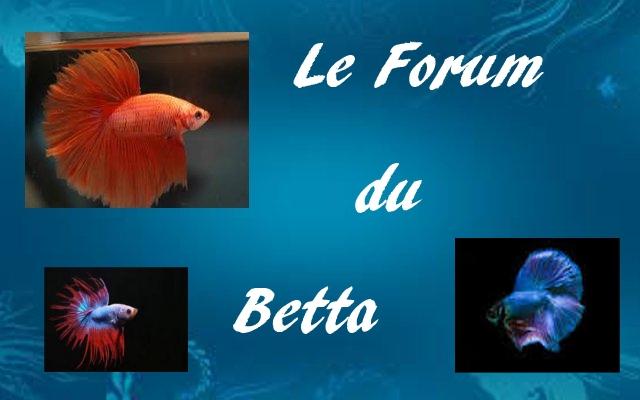 le forum du betta Forum Index