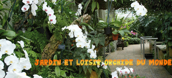 loisir et jardin et orchid es du monde kalanchoe soigner sa floraison. Black Bedroom Furniture Sets. Home Design Ideas