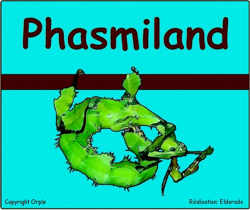 Phasmiland Index du Forum