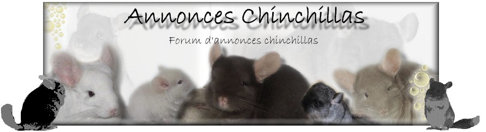 mes annonces chinchillas Forum Index