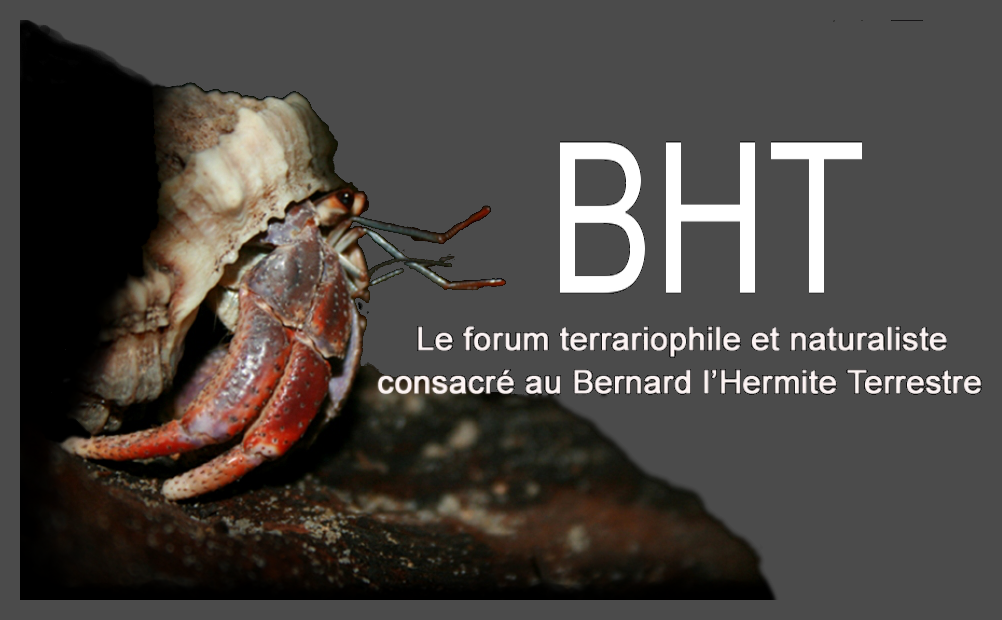 BHT : Le forum 100% bernard l'hermite terrestre (Coenobita sp.)  Forum Index