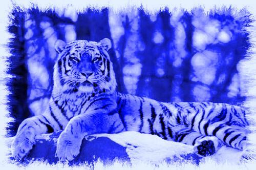 Les Tigres De l'espace wing Index du Forum