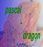 pascal-dragon