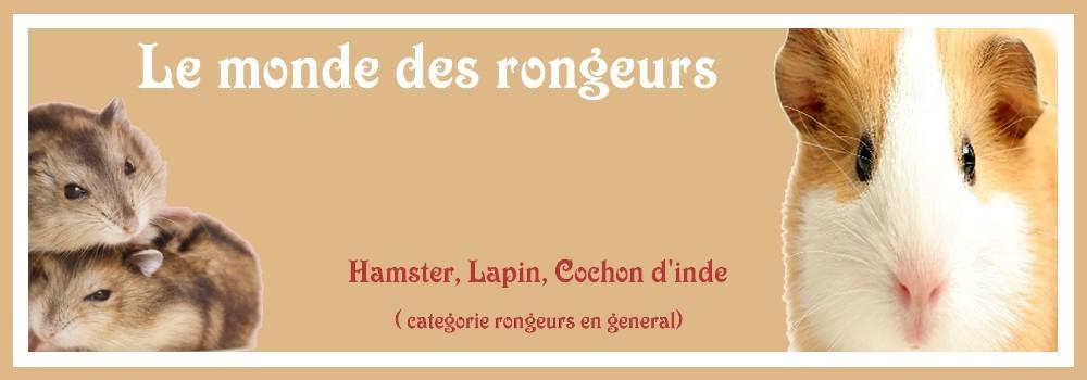 Le Monde des Rongeurs Index du Forum