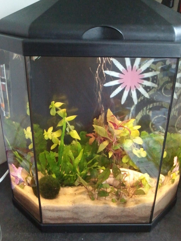 Aquaohm led pour aqua rena 30 litres for Aquarium rena
