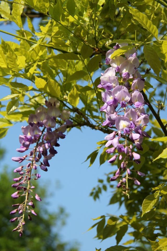 LE FORUM DES BORDER TERRIERS :: Fleurs d'avril dans le jardin