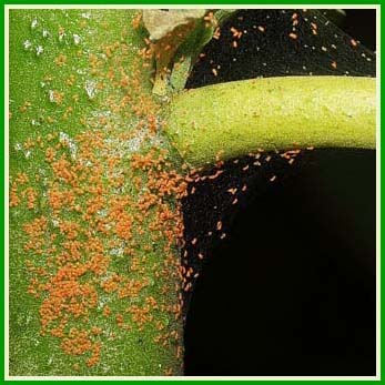 Et le temps sec - Petit insecte rouge jardin besancon ...