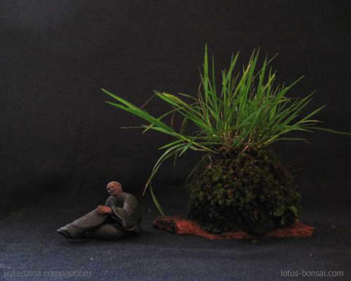 naturellement bonsa kokedama penjing compositions. Black Bedroom Furniture Sets. Home Design Ideas