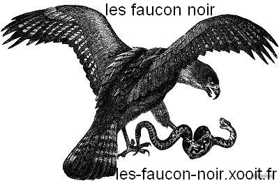 les faucon noir Index du Forum