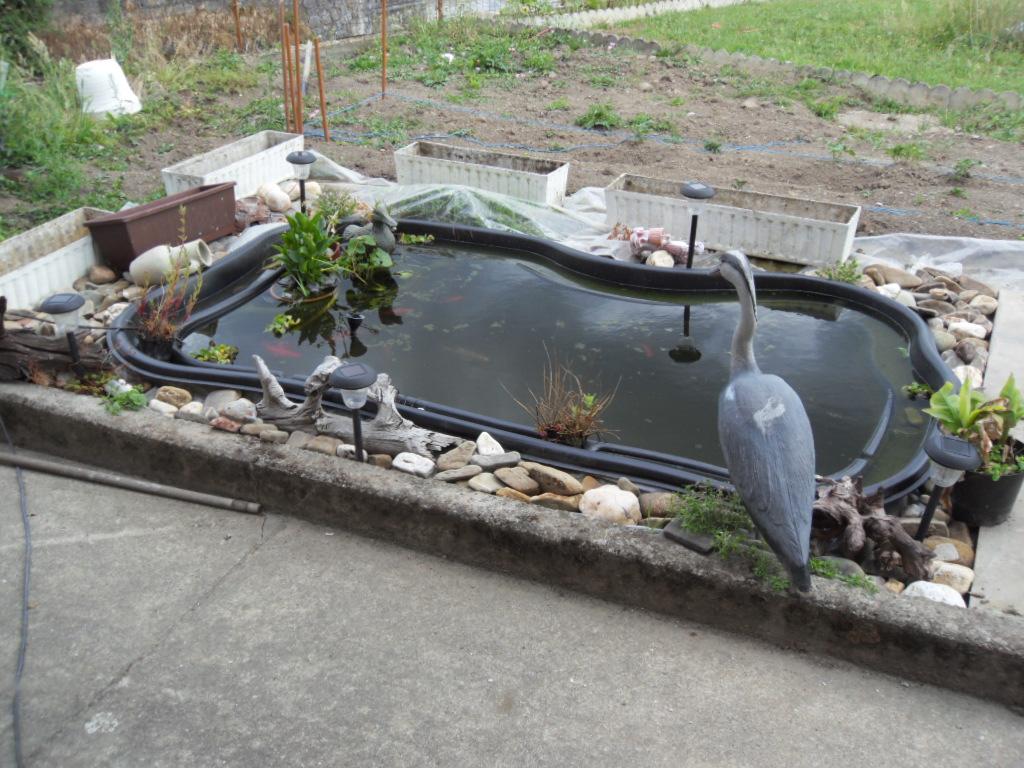 Design bassin exterieur pour tortue d eau le havre 2237 for Poisson rouge en bassin exterieur